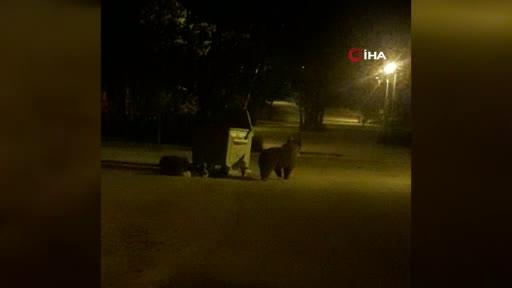 Bursa'da yiyecek arayan ayı, çöp konteynerini sürükleyip devirdi