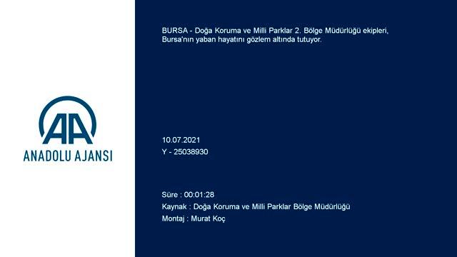 Bursa'nın yaban hayatı gözlem altında