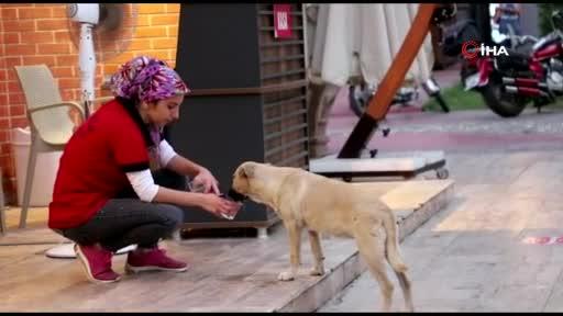 Susuz kalan köpeğe su içiren belediye personeli yürekleri ısıttı