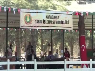 Bursa'da 'Kuzgun Efe' açık artırmada 315 bin liraya satıldı
