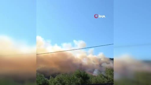 Bursa Mudanya'da orman yangını! - 2