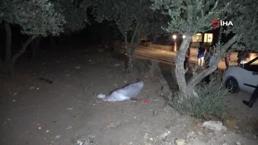 Bursa'da 15 yaşındaki genç zeytinlikte ölü bulundu