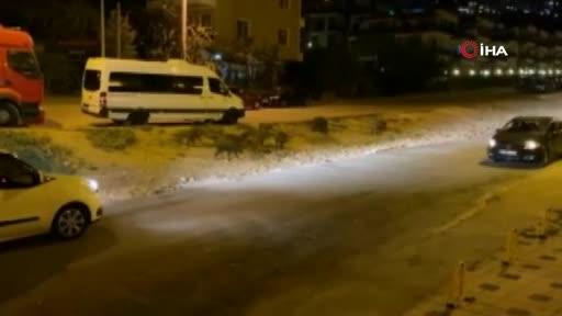 Bursa'da aç kalan domuzlar şehre indi