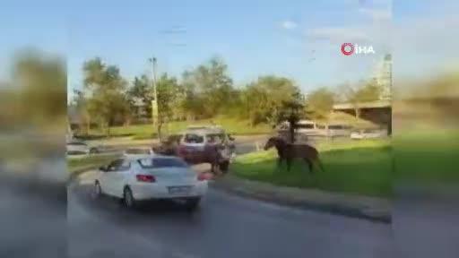 Bursa'da başıboş atlar kaldırımda yürüyüp araçlar gibi anayolda ilerliyor
