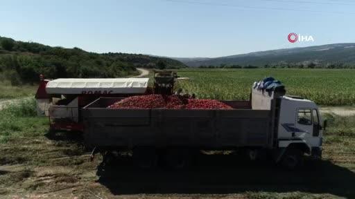Bursa Karacabey'in salçalık domatesi karaborsa