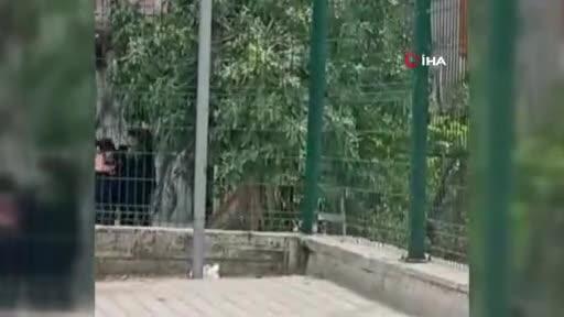 Bursa'da kadınlar saç saça baş başa birbirine girdi