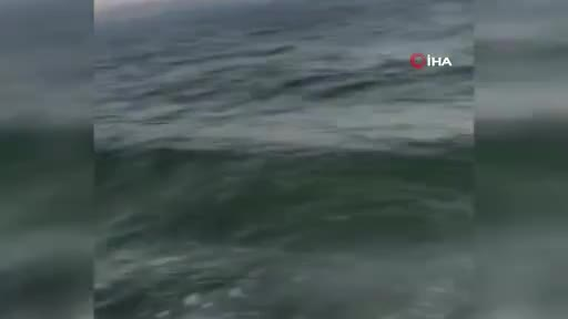 Bursa'da ateşli silahla vurulmuş yunus balığı bulundu