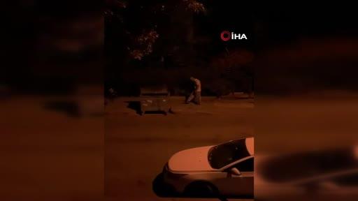 Ankara'da öğretmen sokak hayvanları için bırakılan mamaları tekme atarak döktü