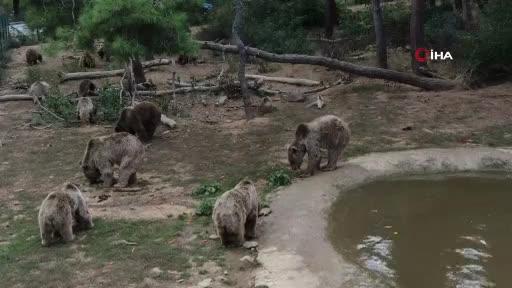 Kayalıklardan düşerek yaralanan kör ayı yeni yuvasına Bursa'da kavuştu