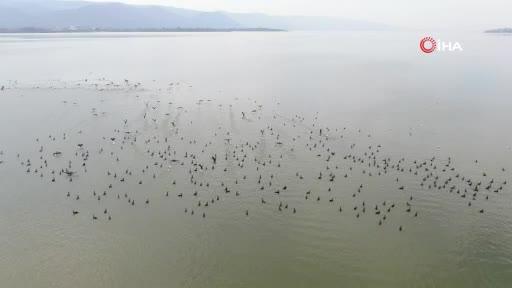Binlerce kuşa ev sahipliği yapan Bursa Uluabat'ta çember daralıyor