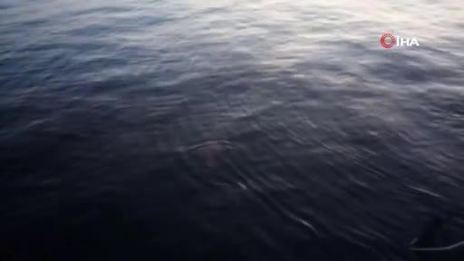 Bursa'da oltaya takılan nesli tükenme tehlikesi altında olan balık denize bırakıldı