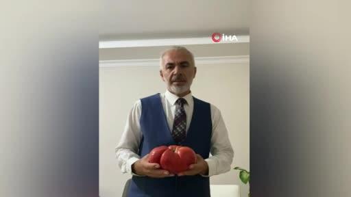 Bursa'da dev domates görenleri şaşırtıyor