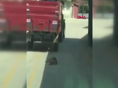 Tekirdağ'da bir şahıs traktörün römorkuna bağladığı köpeği metrelerce sürükledi