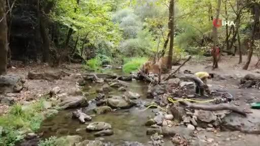 Bursa'da Uludağ'ın eteklerinde altın arıyorlar